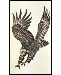 "Tattoo  "" Grand Aigle  """