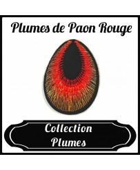 Patch Plume de Paon Rouge